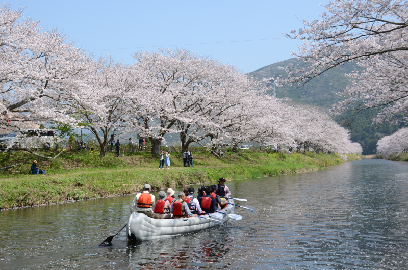 那賀川の桜並木