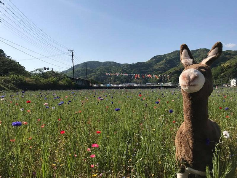 「田んぼをつかった花畑」の開花情報です。