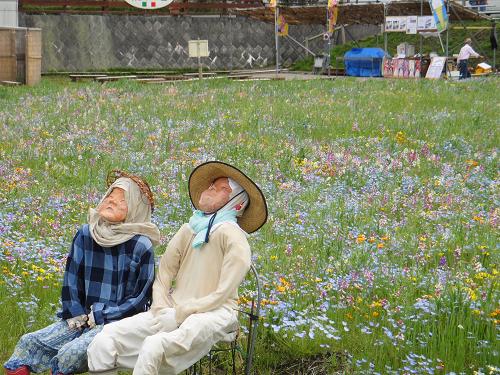 【2015年開花情報】田んぼをつかった花畑