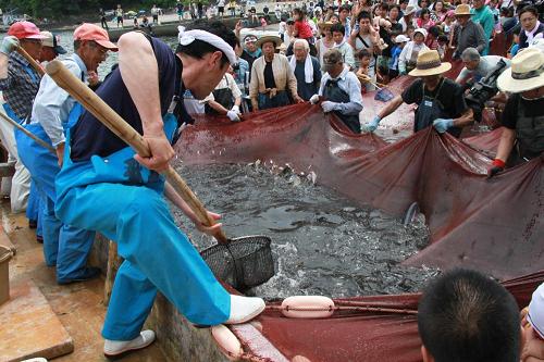 石部温泉大地曳き網まつり | 松崎町観光協会-花とロマンの里松崎町へようこそ-