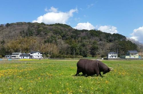 牛の案山子が花畑に設置されました。
