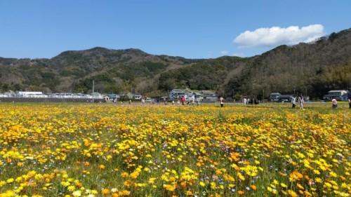 2016年3月27日(日)花畑開花情報