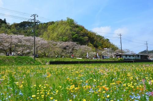 2016年4月9日(土)花畑開花情報