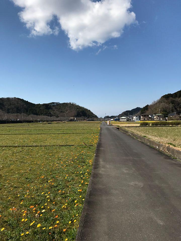 2/27(月)田んぼをつかった花畑の開花情報です。