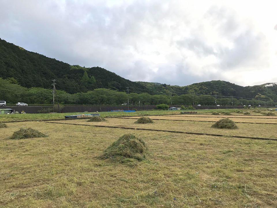 田んぼをつかった花畑が終了しました。