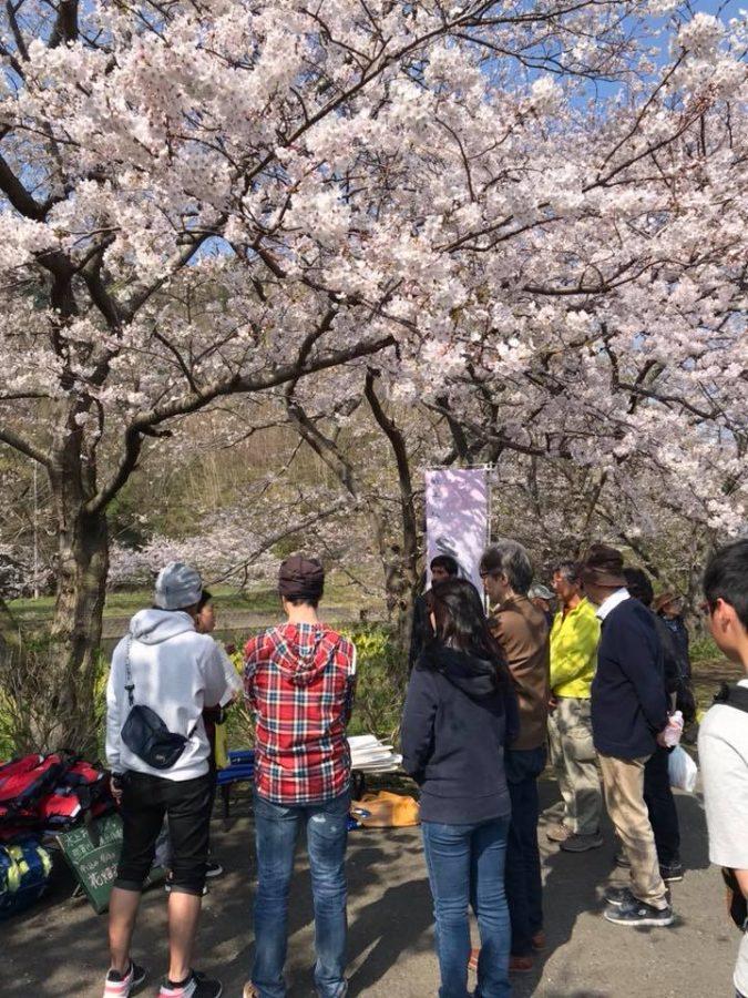3/27(火)那賀川沿いの桜並木が満開になりました。