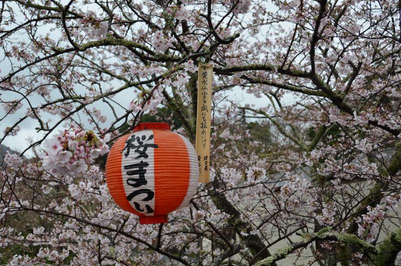 第74回大沢桜祭り俳句募集
