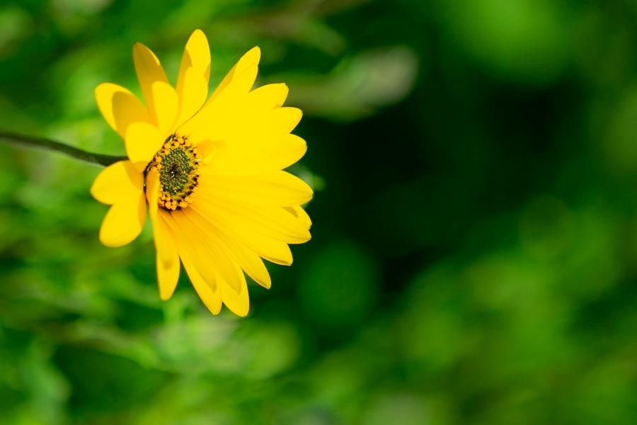 【田んぼをつかった花畑】いよいよ花が咲き始めました♪