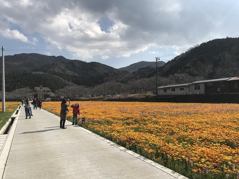【田んぼをつかった花畑】2019年3月2日(土)開花情報
