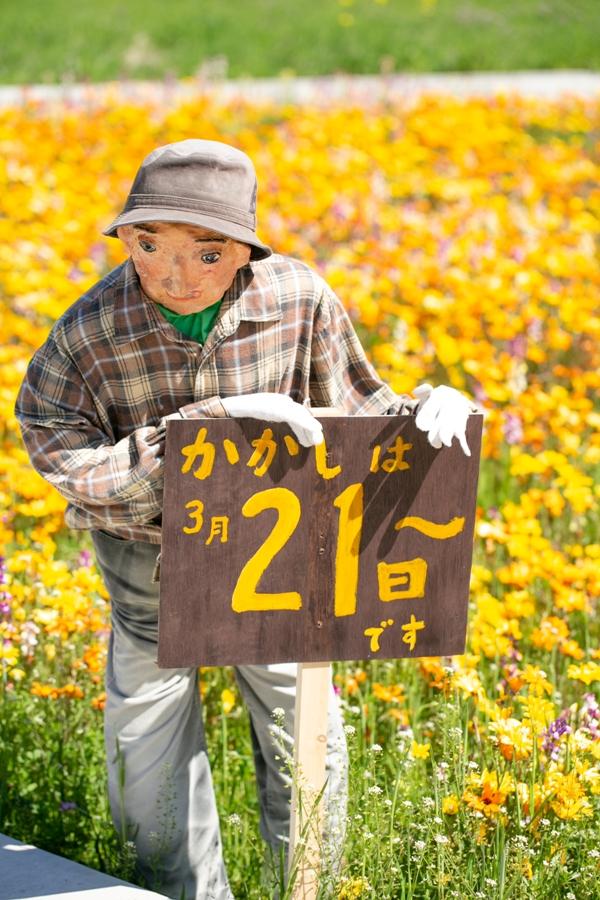 【本日の田んぼをつかった花畑】3月21日~カカシが♪
