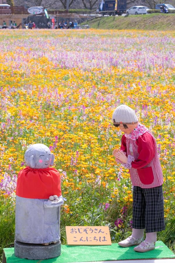 【本日の田んぼをつかった花畑】いよいよたくさんのカカシや売店も!