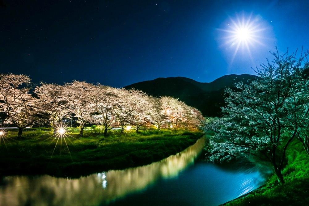 【今年の桜も素晴らしかった】夜桜ライトアップ