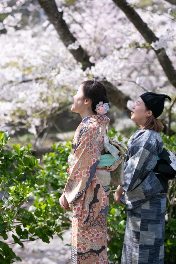 【4/6松崎の桜 見ごろです】大沢温泉・那賀バイパス沿い