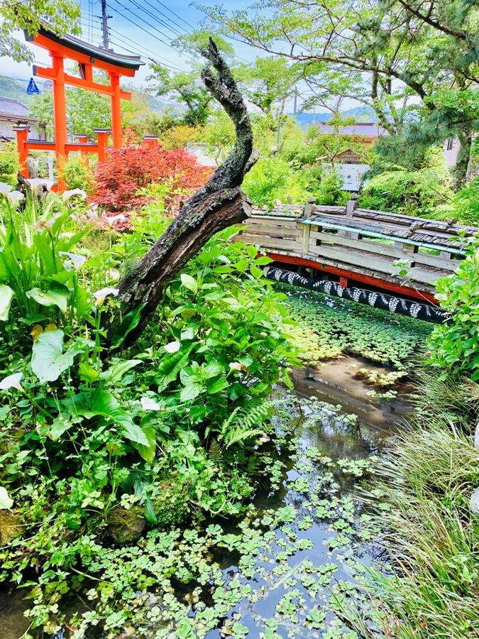 【町内散策に】伊那下神社…初夏の彩りがきれいです