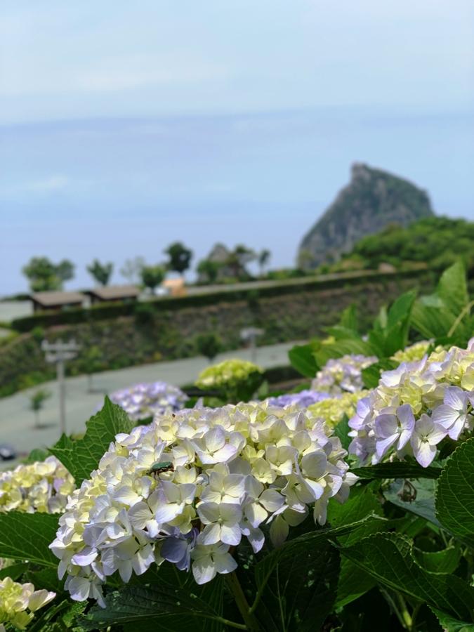 【紫陽花と烏帽子岩】雲見の山から
