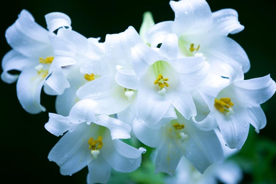 【初夏の彩り】梅雨に濡れる花々