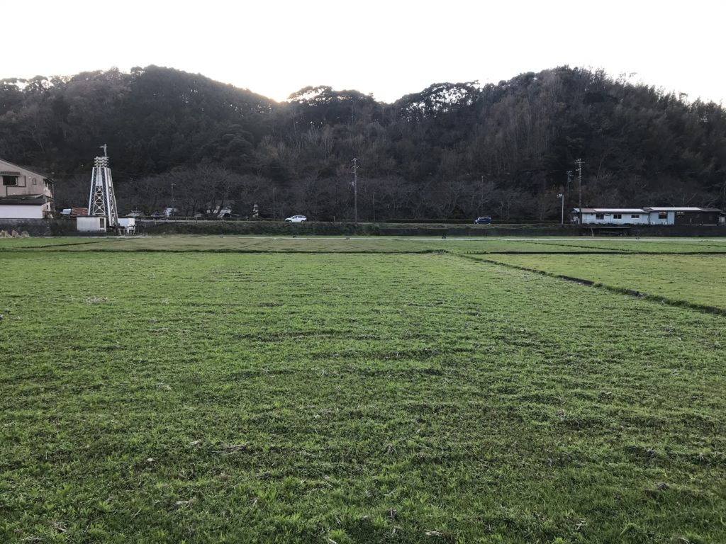 保護中: 田んぼをつかった花畑(157-1番地)