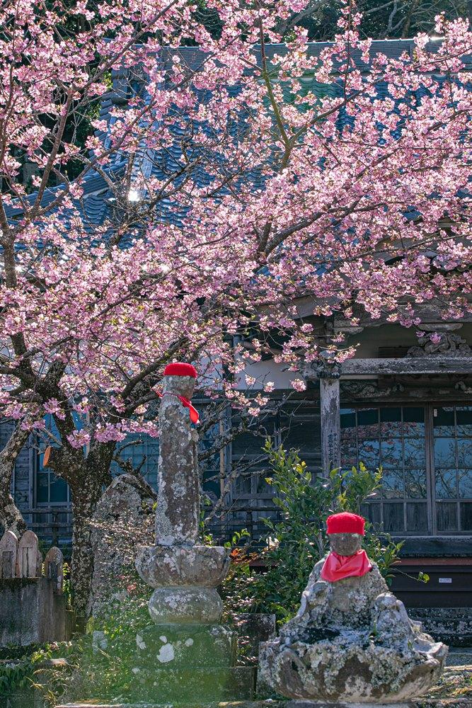 【浄泉寺】桜咲き風情ある景観に