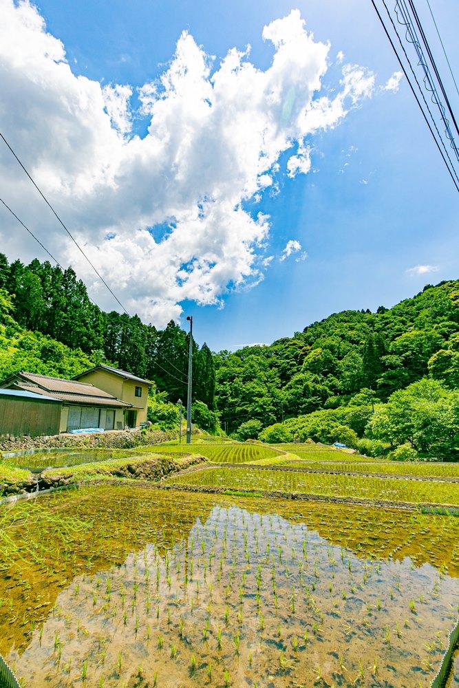 【小杉原】癒しの田園風景