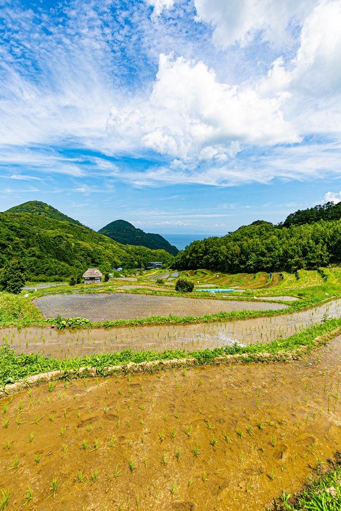 【石部の棚田】初夏景色