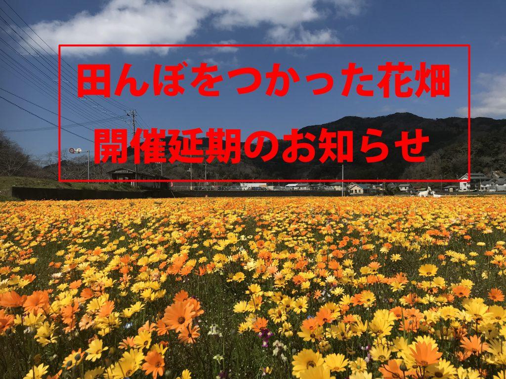 「田んぼをつかった花畑」開催延期のお知らせ