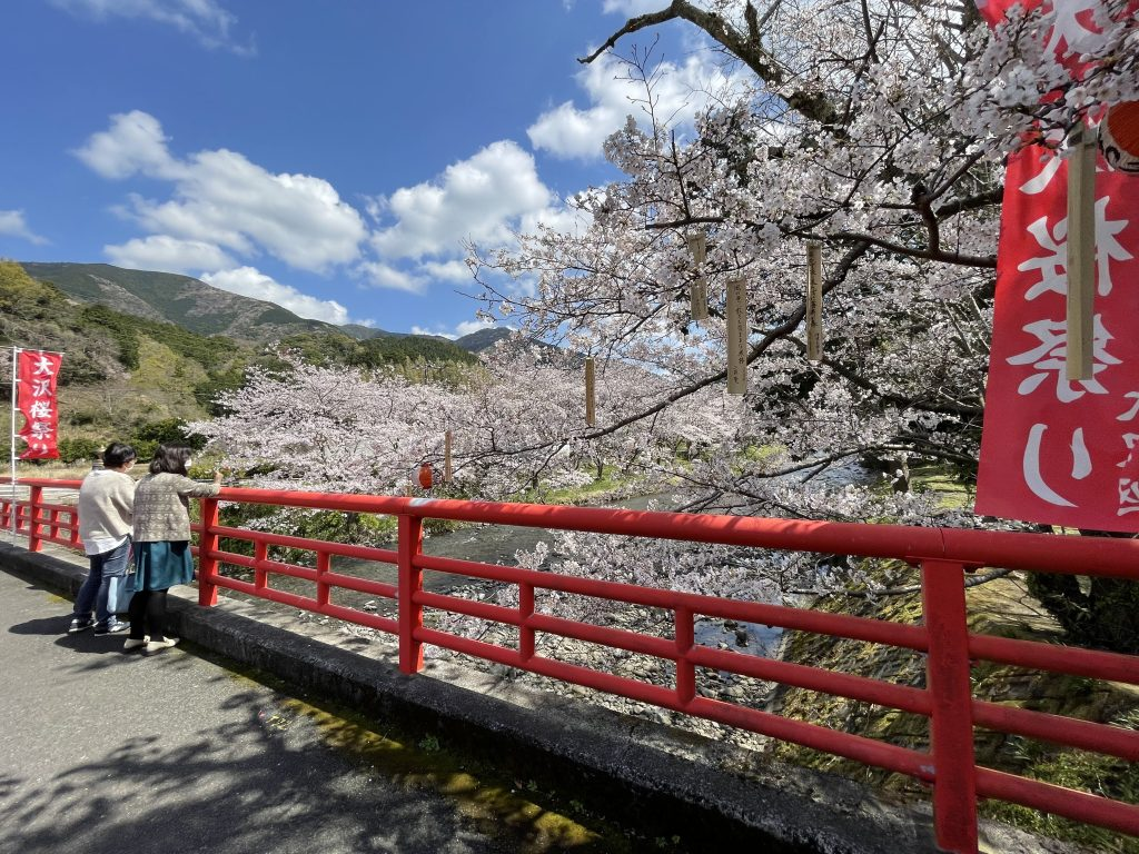 【令和3年3月24日】大沢温泉の桜(開花状況)