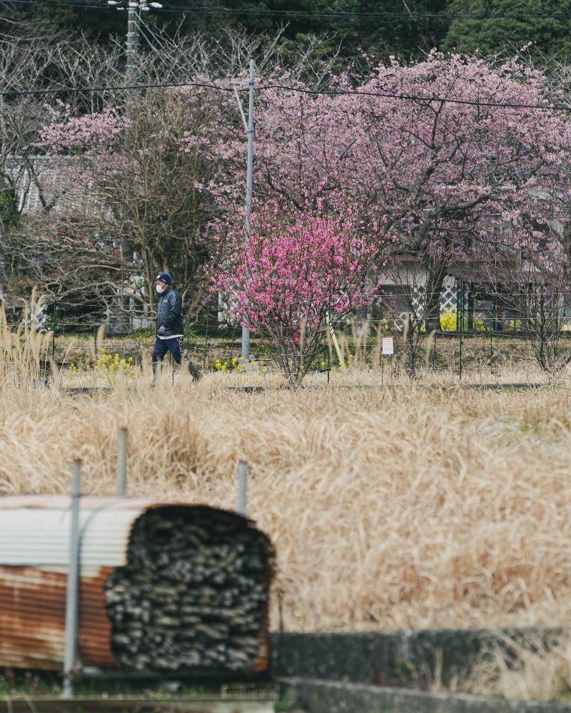 【春色】春ののどかな田舎風景