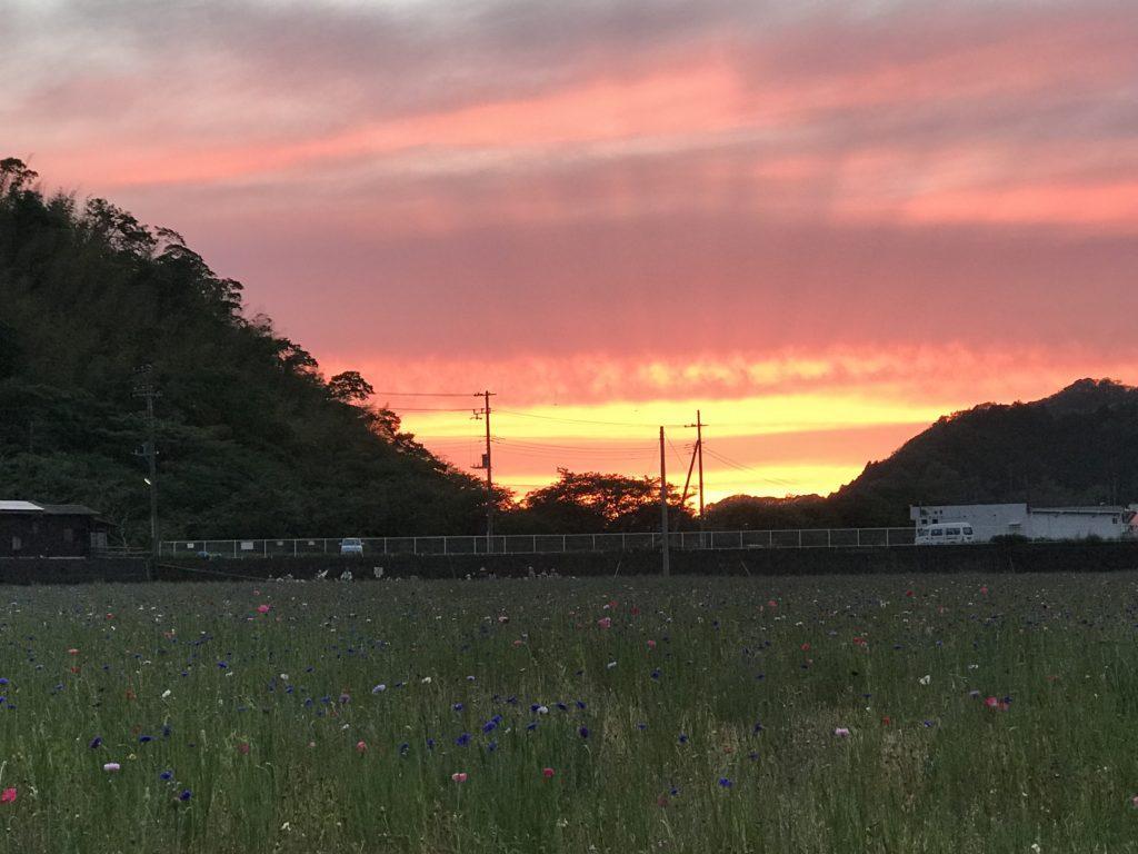 花畑の夕陽。
