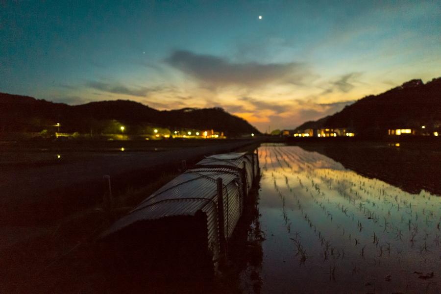【松崎の初夏】水田景色にカエルの合唱